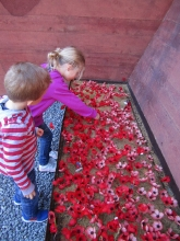 Checking Out The Poppies