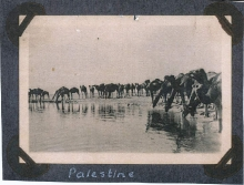Camels At The Water Hole